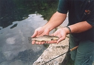 Brown trout from the glacier lake