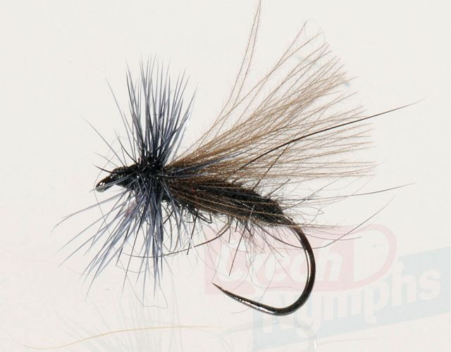 Black_CDC_Sedge__4b766a4e01aba.jpg