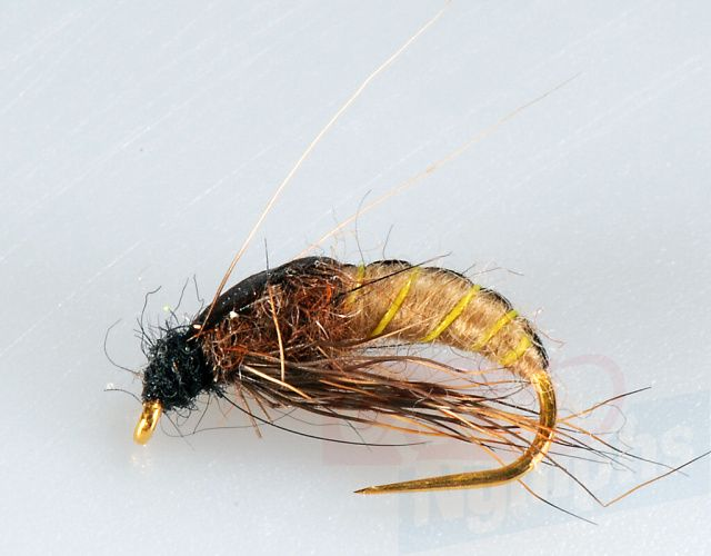Brown_Sedge_Pupa_4b75bc5e68638.jpg
